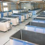 外部加温型保温FRP製水槽2t (実用新案登録2011-3227) かき増産施設整備工事採苗室に 36水槽設置