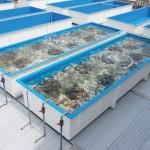 FRP製水槽5t かき増産施設整備工事